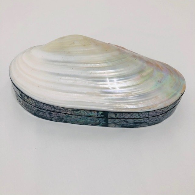 CLAM SHAPE MOTHER OF PEARL TRINKET BOX